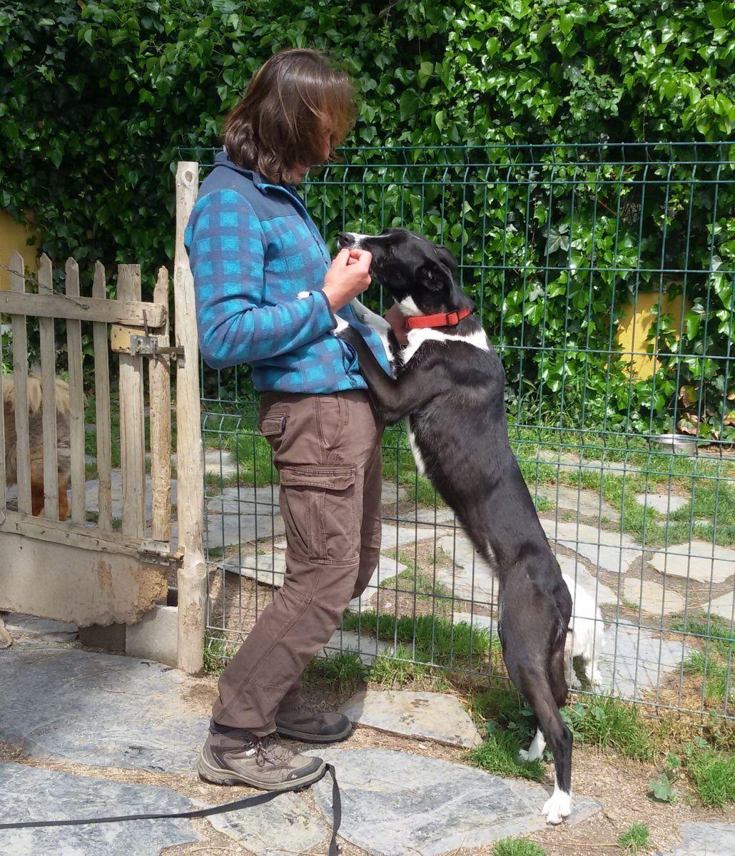 Issa, una perra muy tímida que poco a poco fué cogiendo confianza