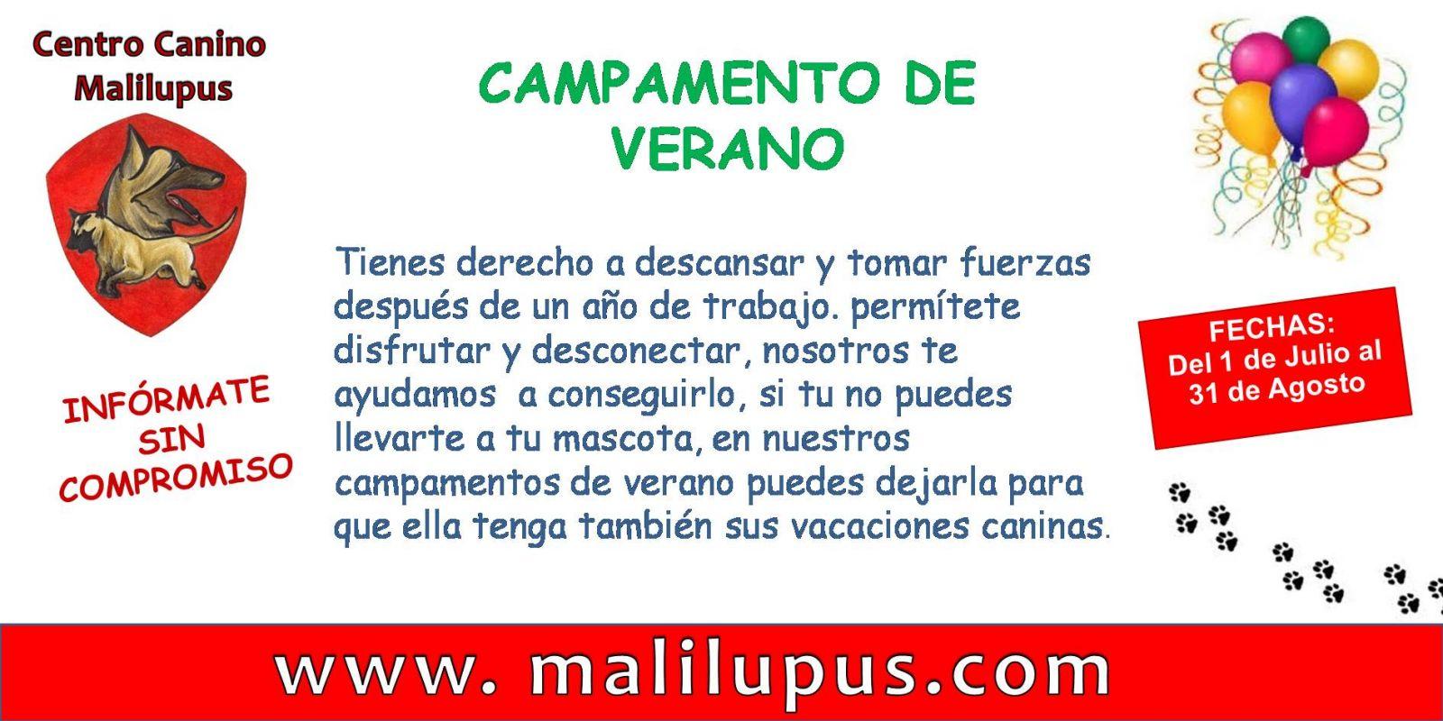 Campamentos de Verano en el Hotel Canino Malilupus