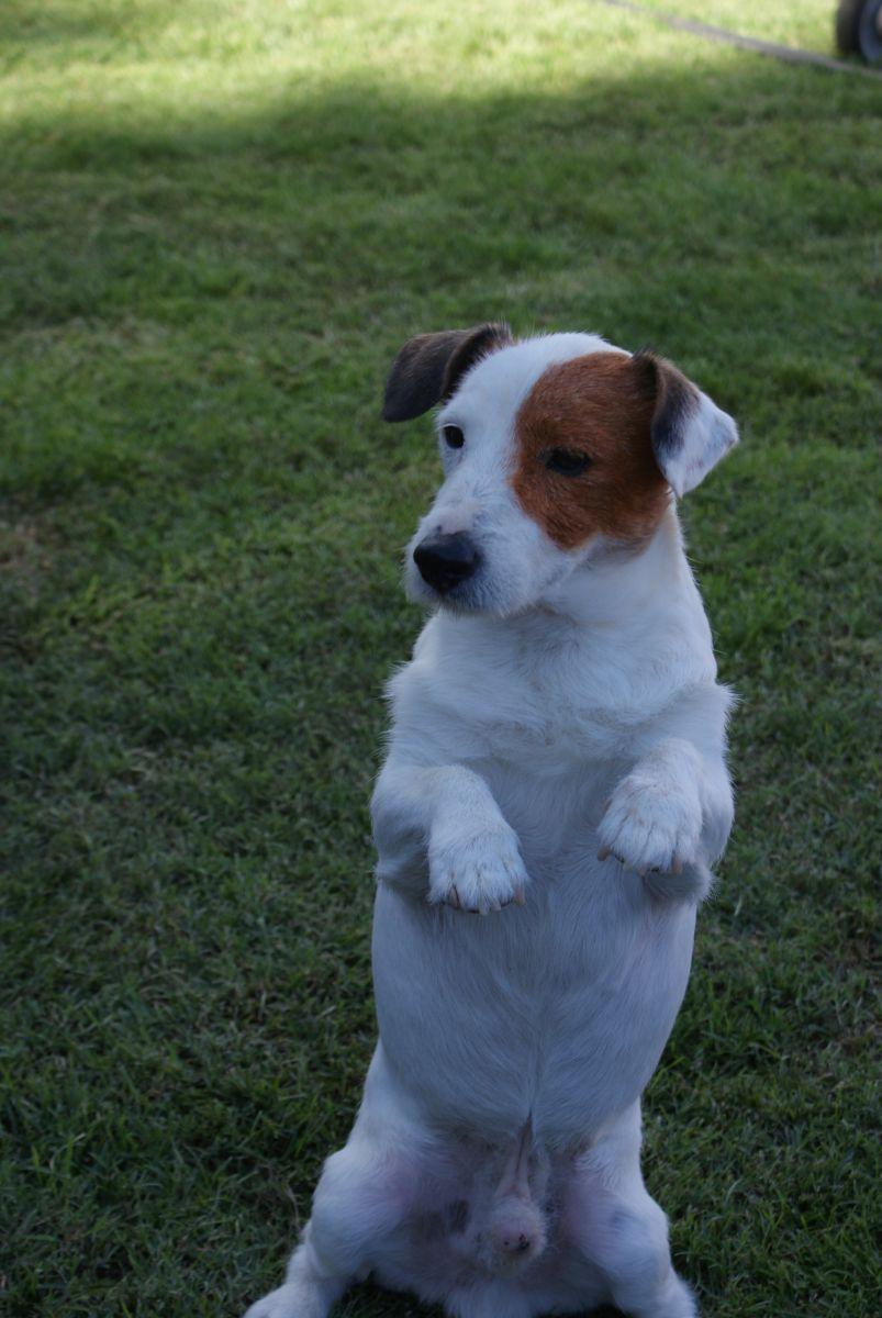 Pancho una verdadera estrella en nuestra residencia canina