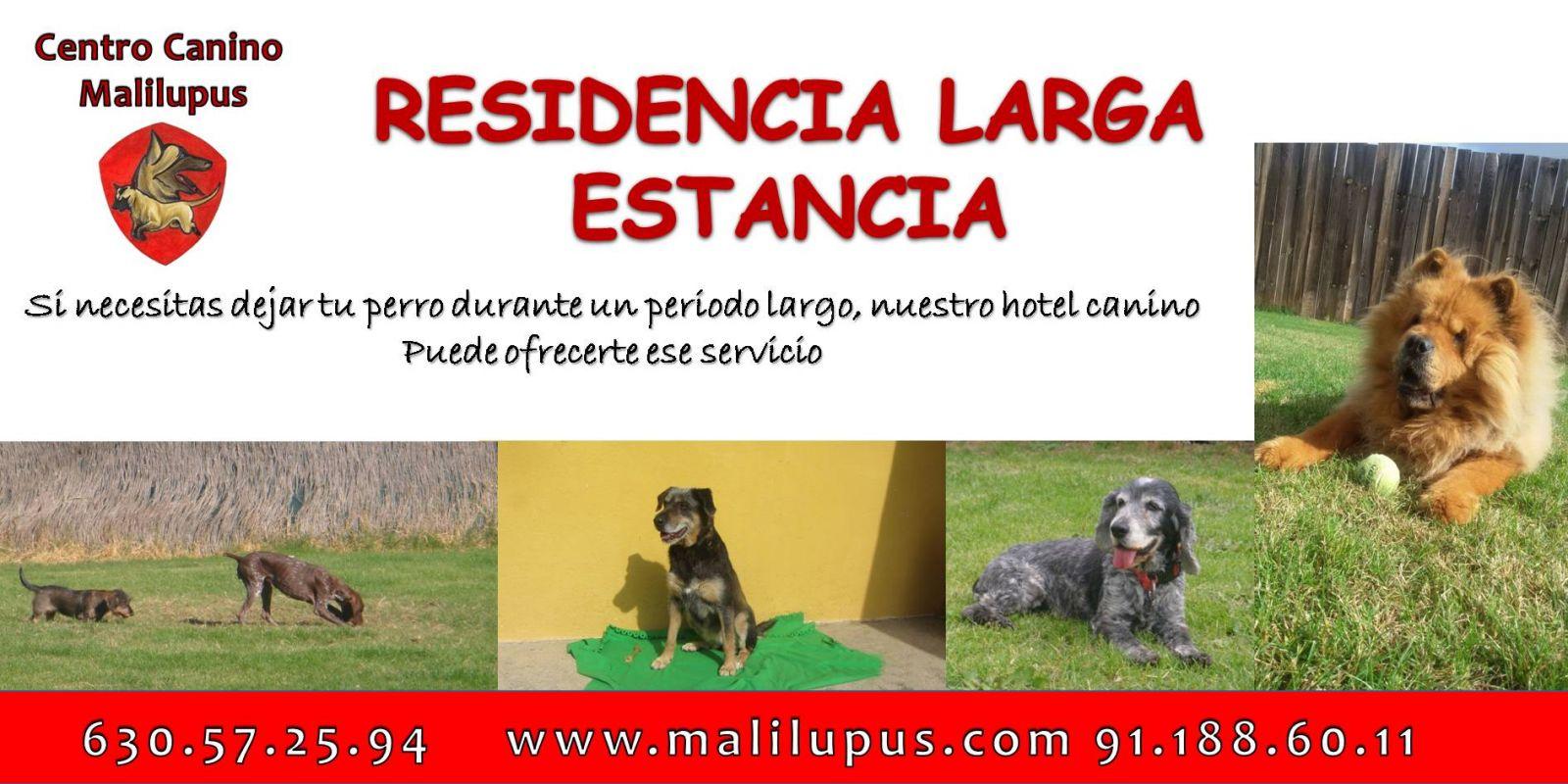 SERVICIO DE RESIDENCIA CANINA LARGA ESTANCIA