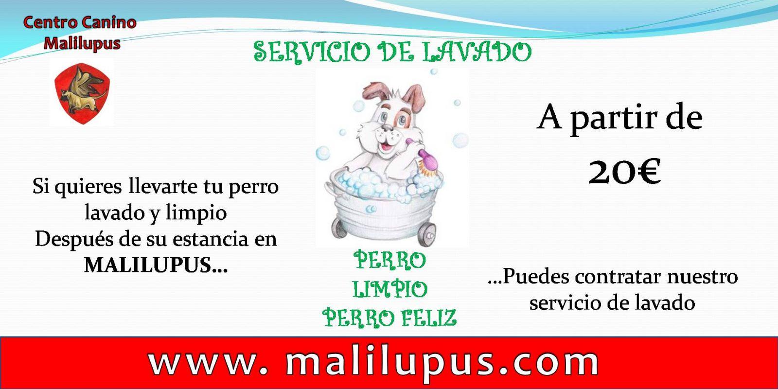 Servicio de Peluquería canina en nuestro Hotel Canino
