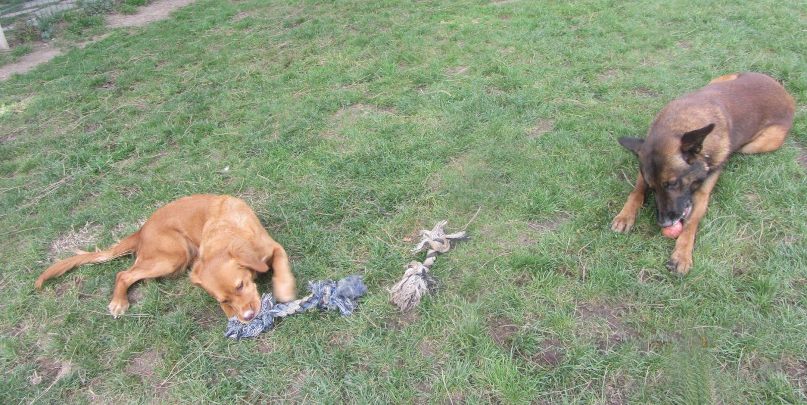 A Biko y Bia les apasiona jugar juntos