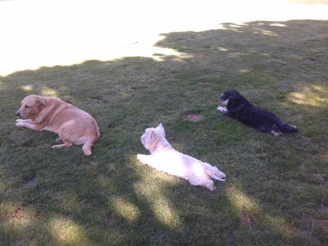 Lacky, Pulgui y Luna descansan