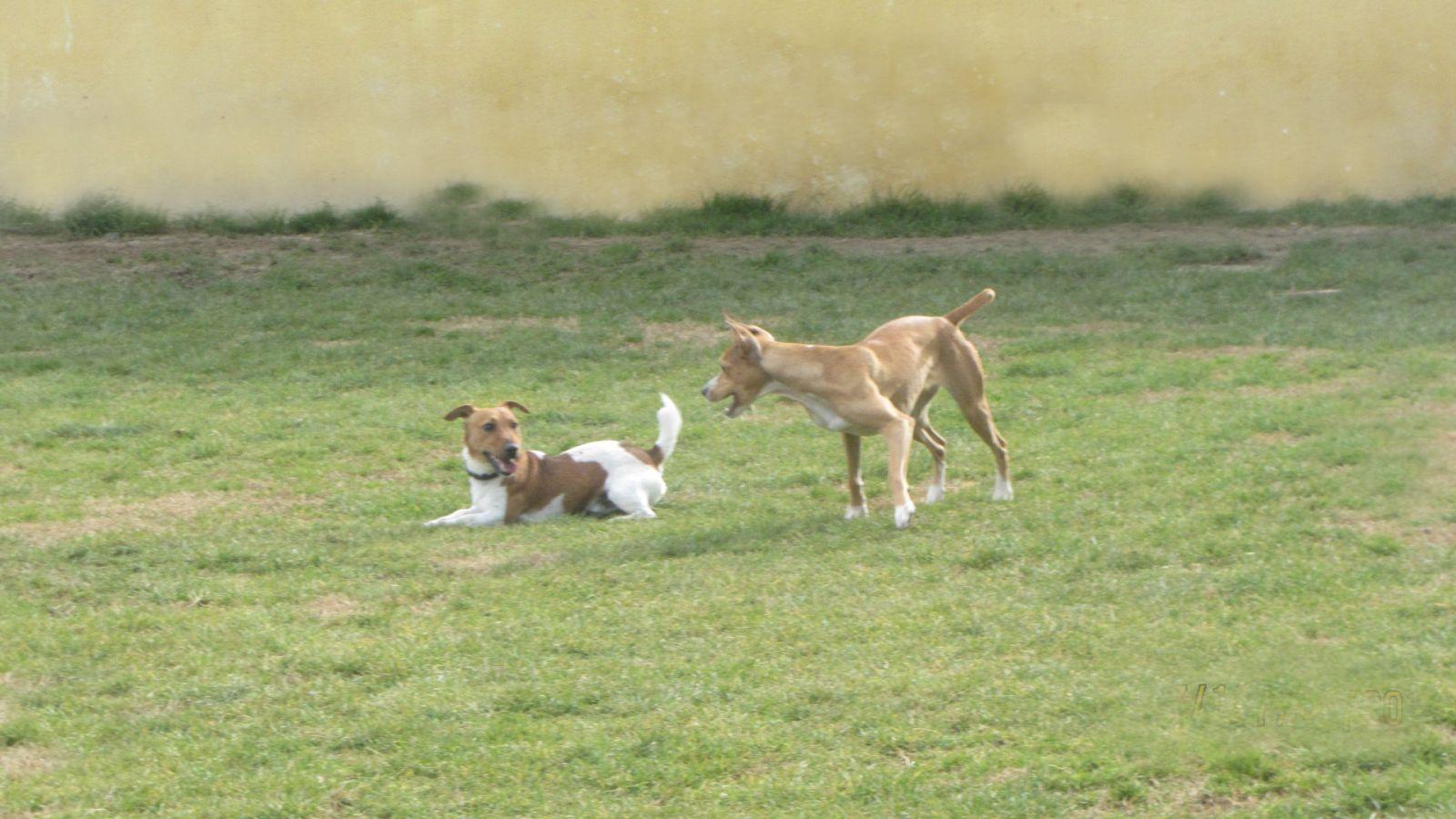 Videos chulos de nuestros residentes caninos